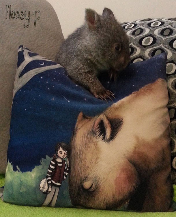 Flossy-p cushion and coco the wombat